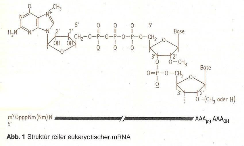 mRNA Abbildung1